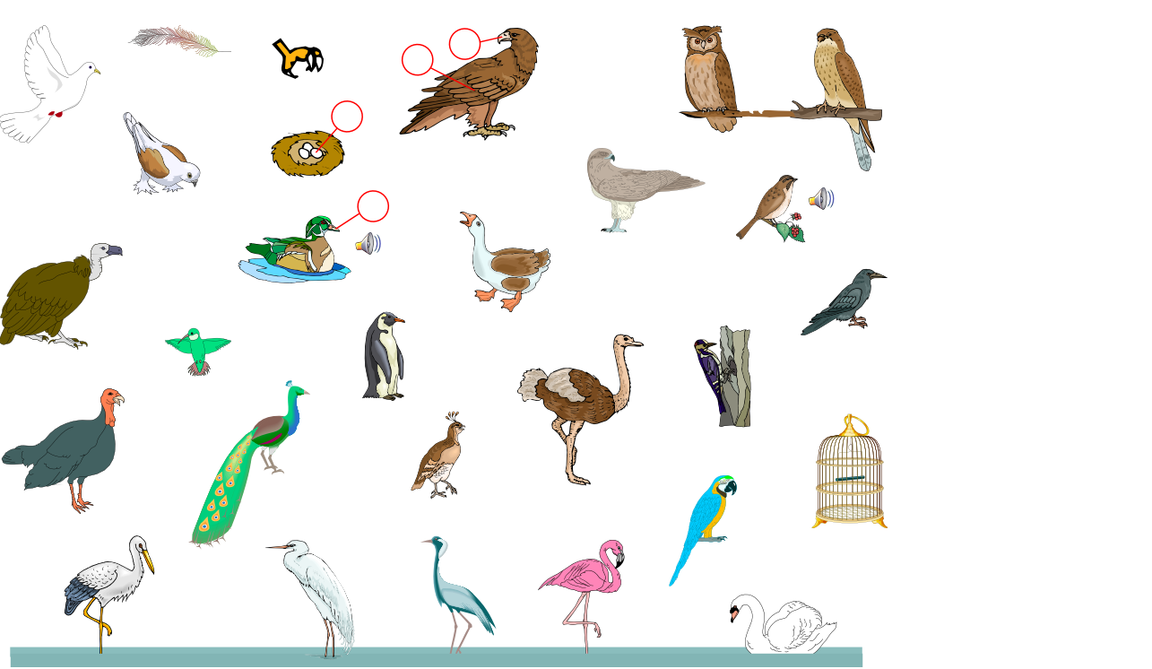 Birds (Vocabulary)