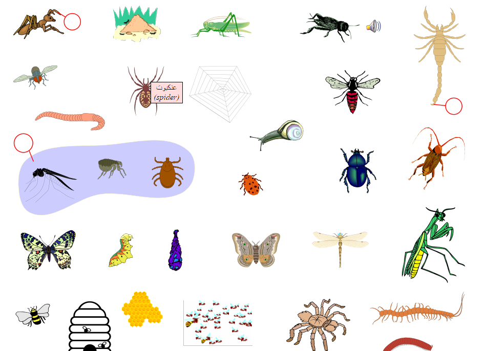 Insects (Vocabulary)