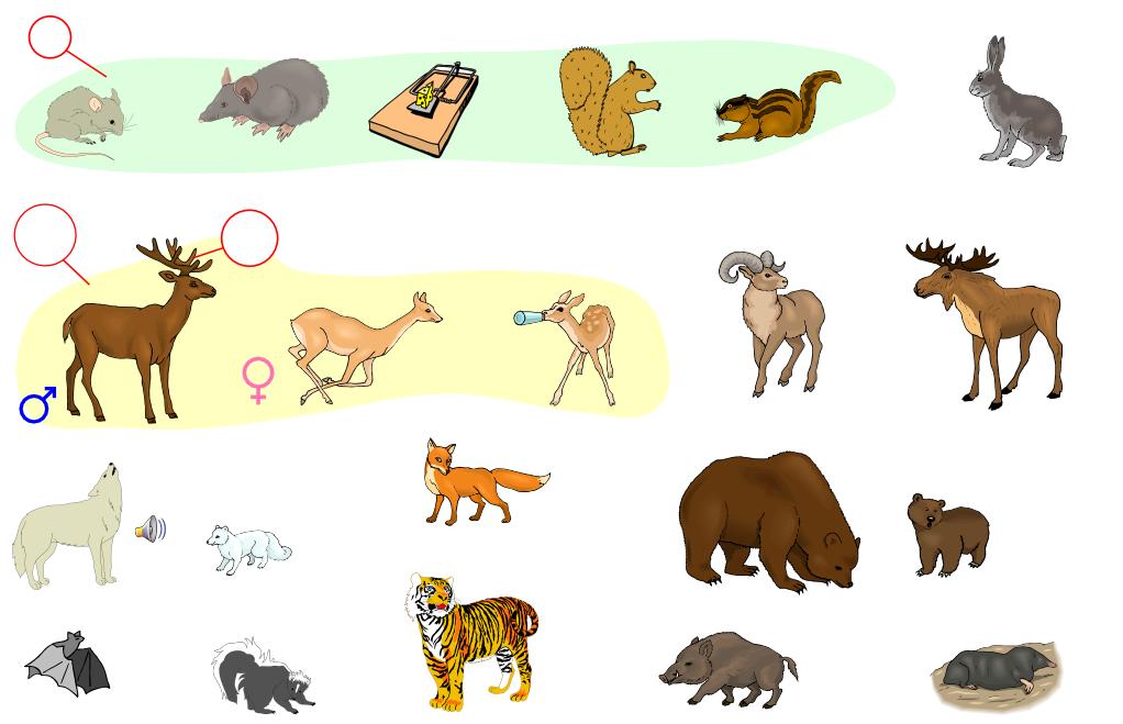 Mammals (Vocabulary)