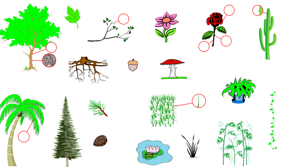 Plants (Vocabulary)