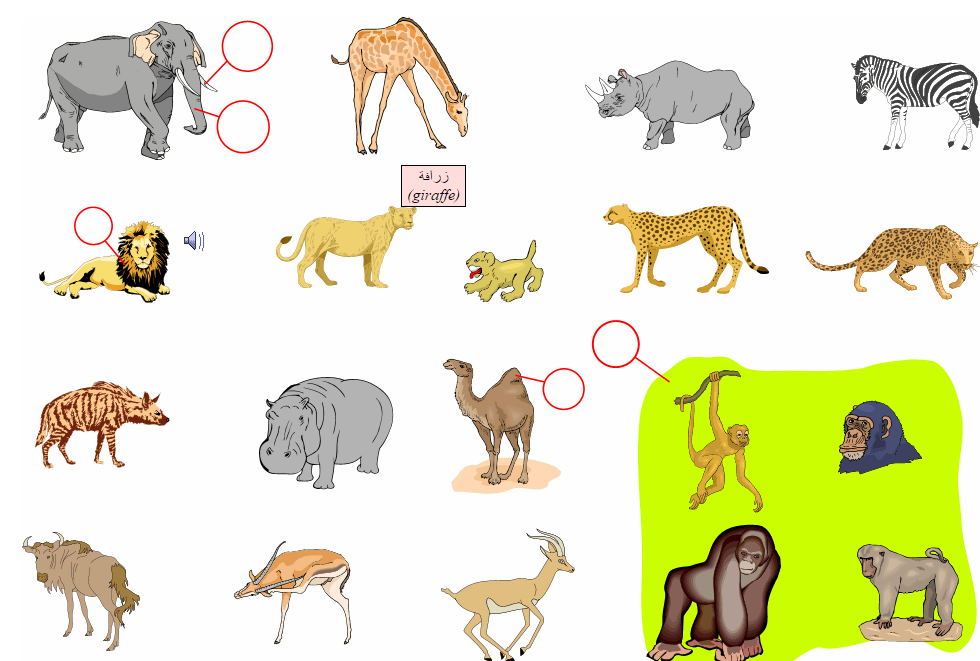 African Animals (Vocabulary)
