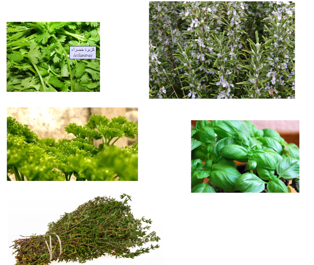 Herbs (Vocabulary)