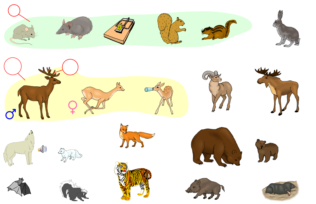 Mammals (Vocabulary)