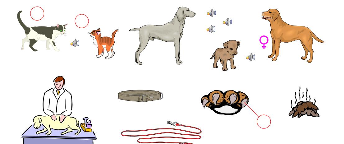 Pets (Vocabulary)