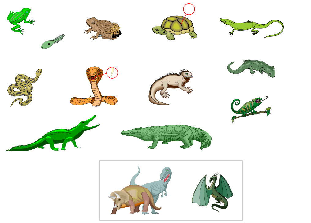 Reptiles and Amphibians (Vocabulary)